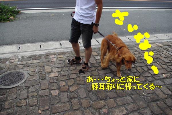 IMGP9738_20121010003229.jpg