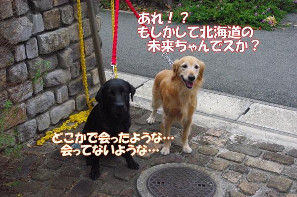 IMGP9745_20121010003229.jpg