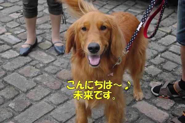 IMGP9751_20121010003228.jpg