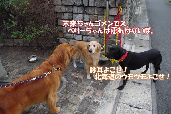 IMGP9764_20121010003228.jpg