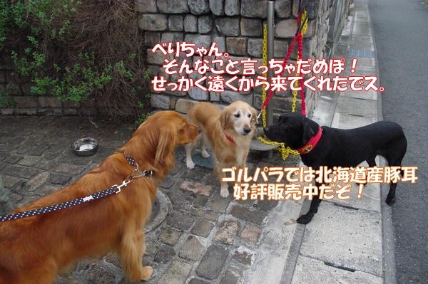 IMGP9765_20121010003255.jpg