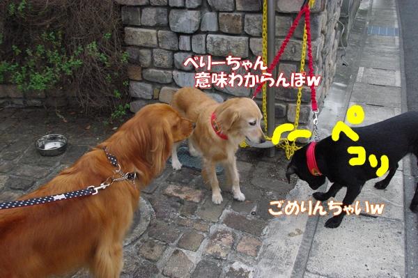 IMGP9766_20121010003254.jpg
