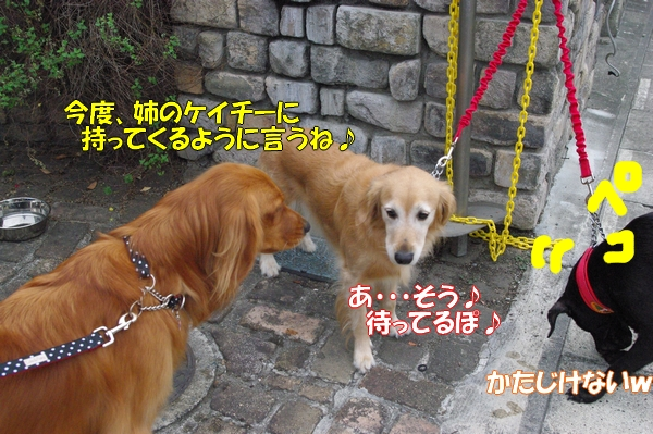 IMGP9767_20121010003254.jpg