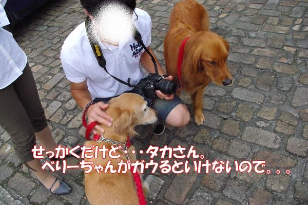 IMGP9773_20121011000520.jpg