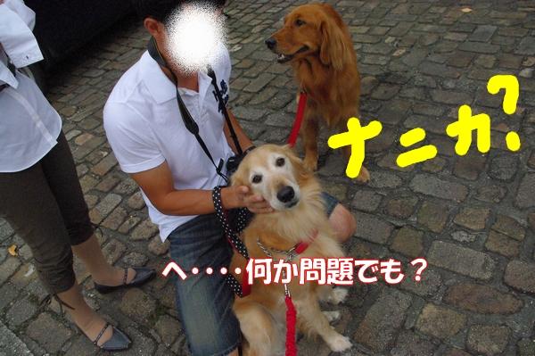 IMGP9778_20121011000558.jpg
