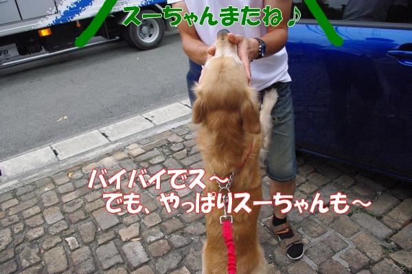 IMGP9787_20121011000557.jpg
