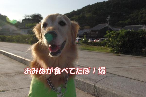 IMGP9847_20121012004607.jpg