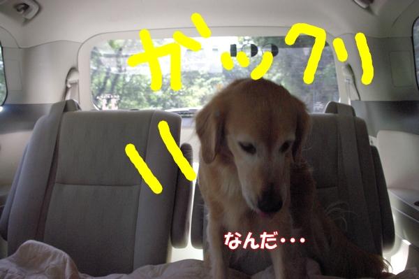 IMGP9888_20121016232736.jpg