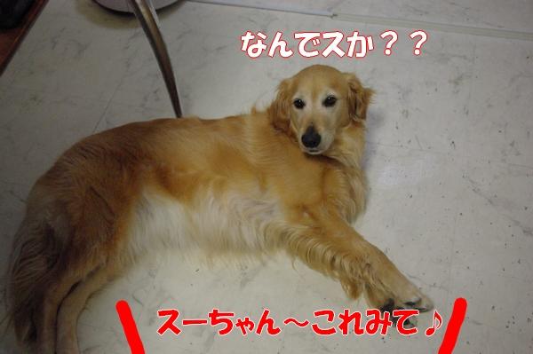 IMGP9920_20120615003621.jpg