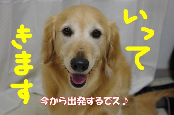 IMGP9952_20120616191836.jpg