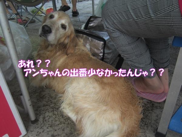 IMG_2398_20120822012305.jpg