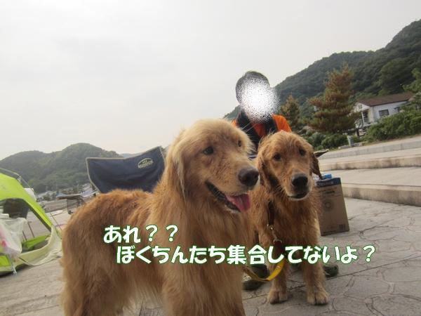 IMG_2423_20120822012304.jpg