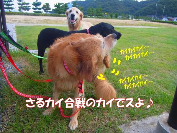 RIMG0067_20120911004206.jpg