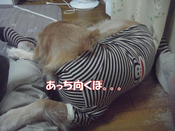 RIMG0295_20121015002848.jpg