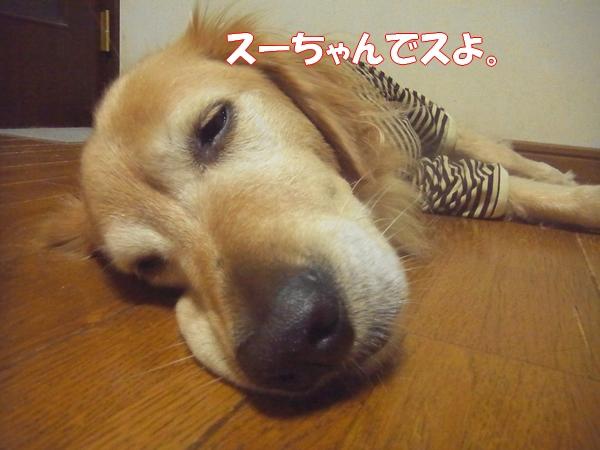 RIMG0325_20121008222449.jpg