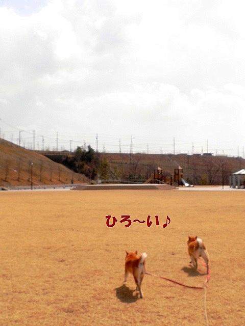 広~い-001