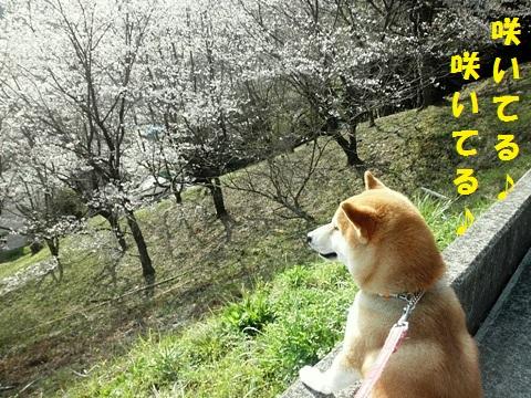 咲いてる-002