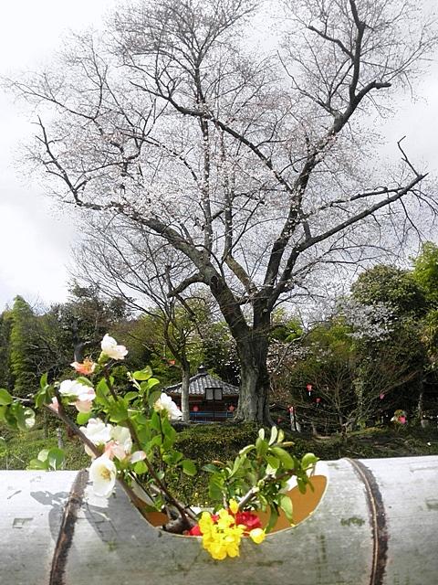 生け花と-001