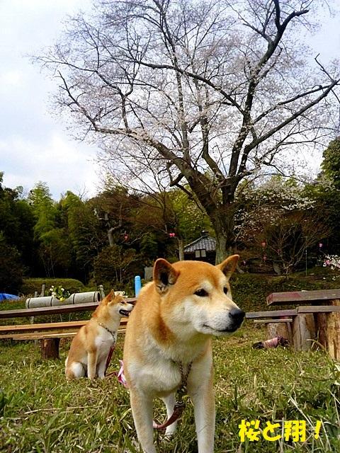 桜と翔-001
