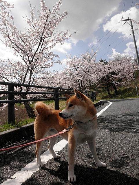 桜並木坂2-001