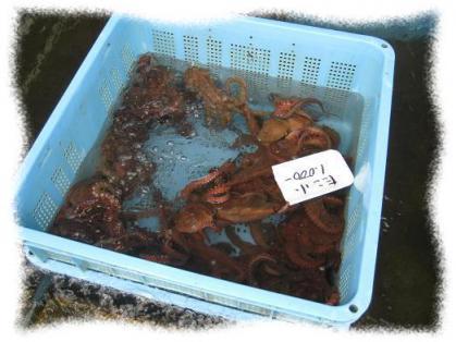 2012年7月15日明石浦漁港④