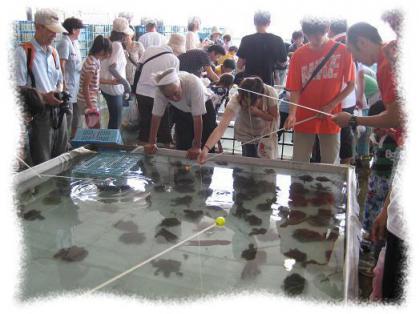 2012年7月15日明石浦漁港②