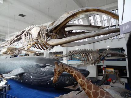 2012年9月自然史博物館③