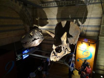 2012年9月自然史博物館②