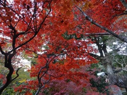 2013年11月24日東山寺の紅葉⑤