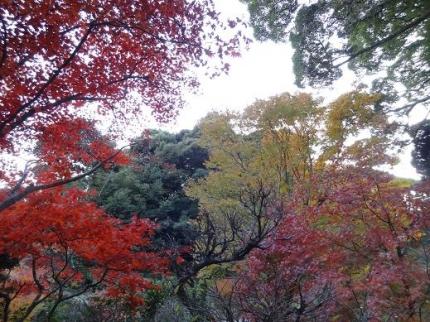 2013年11月24日東山寺の紅葉④