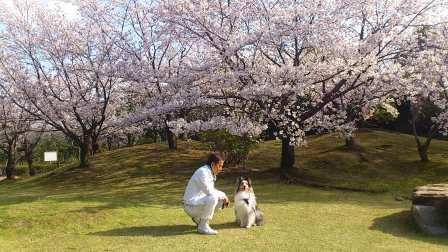 DSC_4147(桜の木下でBOSSと大我君)