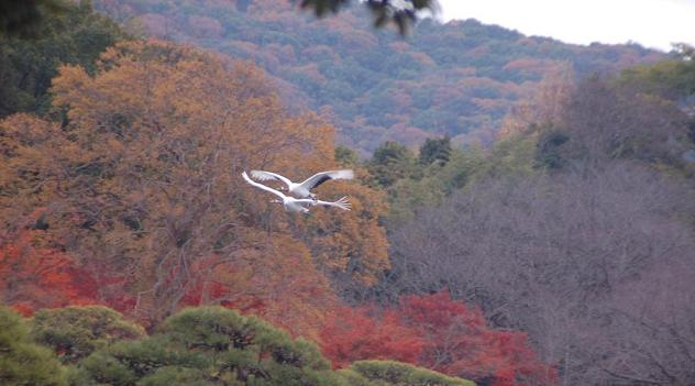 DSC_0076飛ぶ