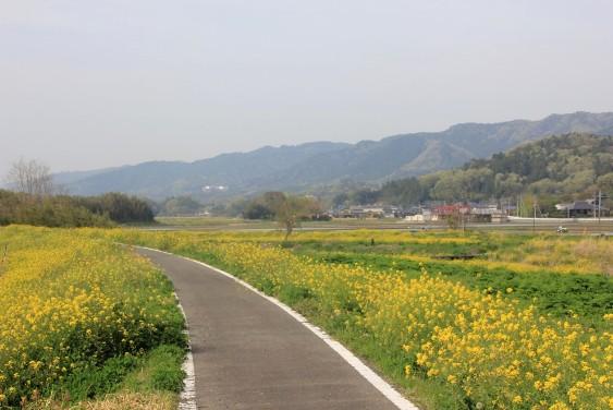 里川の遊歩道