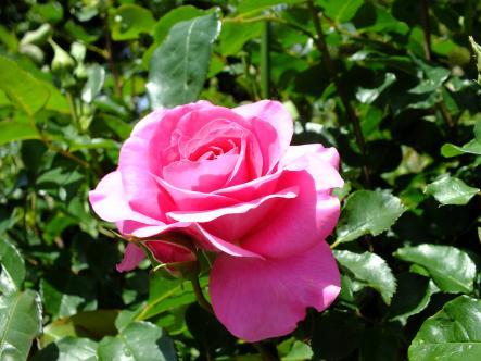 2012-04-28+(122)_convert_20120429171636.jpg
