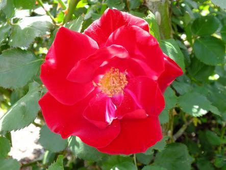2012-04-28+(142)_convert_20120429173659.jpg