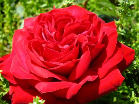 2012-04-28+(89)_convert_20120429170217.jpg