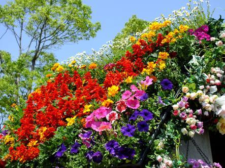 2012-05-05+(96)_convert_20120506170412.jpg
