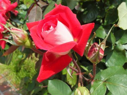 2012-05-16+(252)_convert_20120517181459.jpg