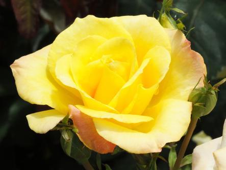 2012-05-16+(73)_convert_20120517175053.jpg