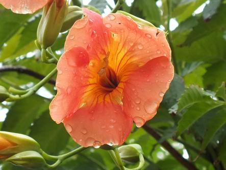 2012-07-07+(5)_convert_20120711143141.jpg