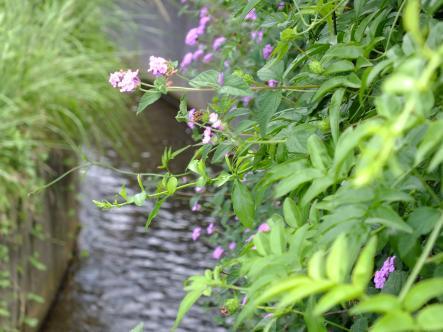 2012-07-30_convert_20120801124436.jpg
