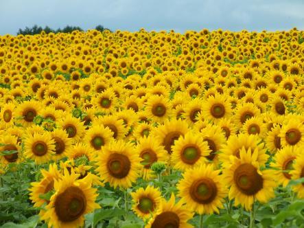 2012-08-17+(124)_convert_20120902110407.jpg