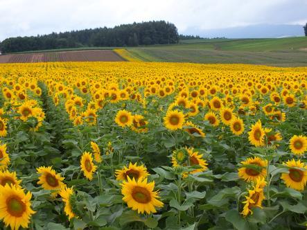 2012-08-17+(98)_convert_20120902103728_20120902112912.jpg