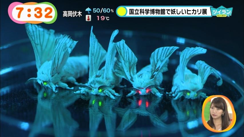 「めざましどようび」光る蚕