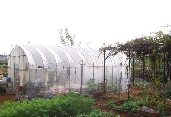 ビニハウスと菜園