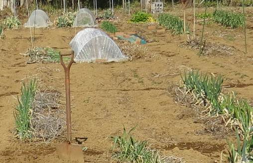 残骸放置菜園