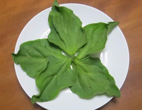 アイスプラントの葉