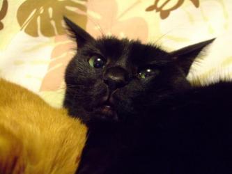 最年少♂黒猫のタコちゃん♪2013.01.07