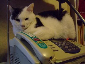 電話の受話器が・・・外れる・・・オチョビ君お気に入り~降りません(´ヘ`;)2013.01.07