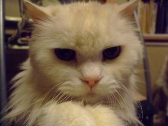 たぶんバセード氏病?ウニ男君~お腹が空いて食べても食べてもガリガリです(´ヘ`;)レブンと同じ16歳♂おねだりちゅ~♪2013.01.07